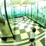 Летен лагер в Национален природонаучен музей
