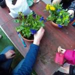 био-игри - Сухоземна среда