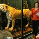 Сибирски тигър