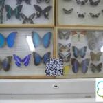 Таг и пеперуда Морфо