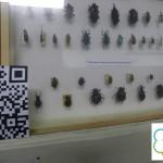 Таг и намибски бръмбар