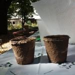 Кашпи за семена